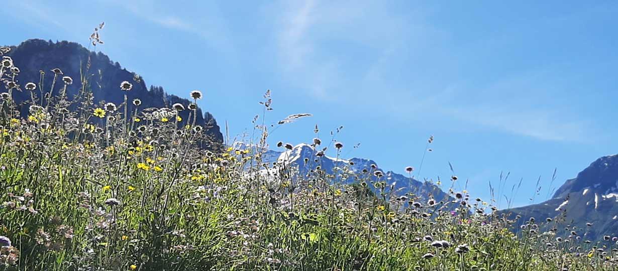Chalet du Bon Air dans le parc de la Vanoise